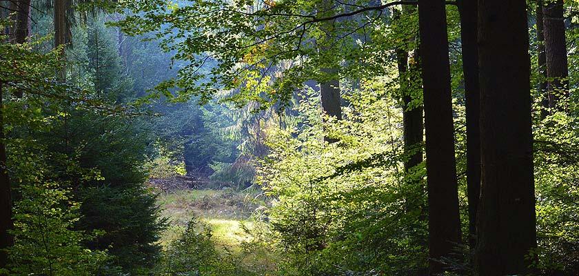 Wald Detail I